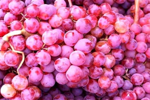 grozde-link5FC63E31-BED1-22EA-1979-6E60CCBEA283.jpg